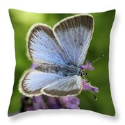 Silvery Blue Butterfly Throw Pillow