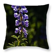 Silvery Lupine   #2 Throw Pillow