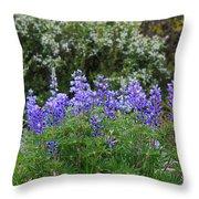Silvery Lupine Black Canyon Colorado Throw Pillow