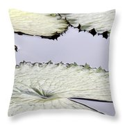 Silvery Sage Green Lily Pads Throw Pillow