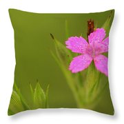 Simple Quiet Beauty  Throw Pillow