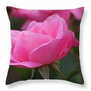 Simplicity Floribunda Rose Throw Pillow