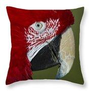 Sinbad... Throw Pillow