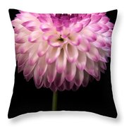 Single And Beautiful Throw Pillow