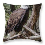 Single Bald Eagle Throw Pillow