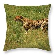 Single Cheetah Running Through The Grass Throw Pillow