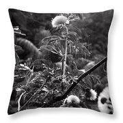 Single Flower In A Spider Web Throw Pillow