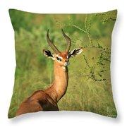 Single Grant's Gazelle Throw Pillow