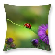 Single In Search Throw Pillow by Christina Rollo