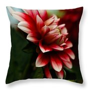 Single Red Dahlia Throw Pillow