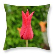 Single Red Tulip Throw Pillow
