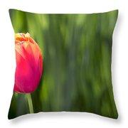 Single Tulip Flower On Green Background Throw Pillow