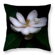 Sweet White Magnolia Bloom Throw Pillow