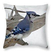 Sitting Blue Jay Throw Pillow