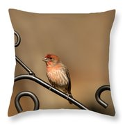 Sitting Pretty Red House Finch Throw Pillow