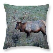 Six By Six Throw Pillow