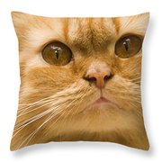 Skc 1480 Inquisitive Throw Pillow