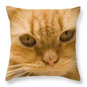 Skc 1483 Unconcerned Stare Throw Pillow