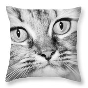 Skc 1498 Wide Eyed Throw Pillow