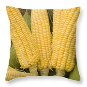 Skc 3270 Take A Bite Throw Pillow