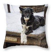 Skeeter The Sled Dog  Throw Pillow