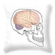 Skull And Brain Throw Pillow