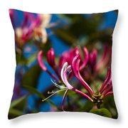 Sky Blue Pink Throw Pillow