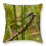 Slaty Skimmer Sunning Throw Pillow