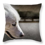 Sled Dog Throw Pillow