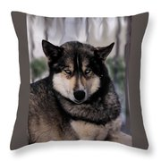 Sled Dog Resting Throw Pillow
