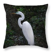 Sleek And Dressed To Please Throw Pillow