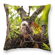 Sleeping Baby Red Shouldered Hawk Throw Pillow
