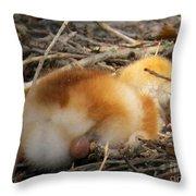 Sleeping Chick Throw Pillow