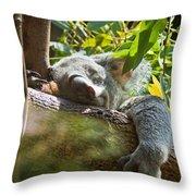 Sleeping Koala Throw Pillow