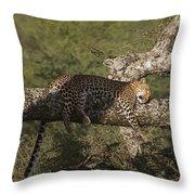Sleeping Leopard Throw Pillow