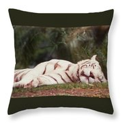 Sleeping White Snow Tiger Throw Pillow