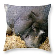 Sleeping Sow Throw Pillow