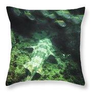 Sleeping Wobbegong And School Of Fish Throw Pillow