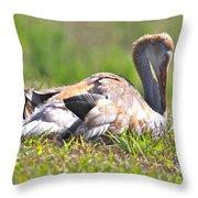 Sleepy Baby Sandhill Crane Throw Pillow