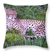 Sleepy Cheetah Throw Pillow