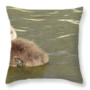 Sleepy Cygnet Throw Pillow