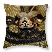 Sleepy Snake Throw Pillow