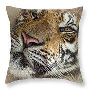 Sleepy Tiger Portrait Throw Pillow
