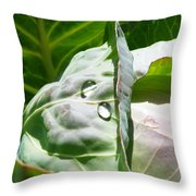 Sliced Cabbage Throw Pillow