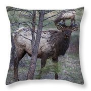 Slim Pickin's  Throw Pillow