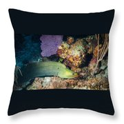 Slithering Moray Throw Pillow