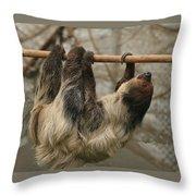 Sloth Throw Pillow by Ellen Henneke