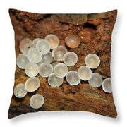 Slug Eggs Throw Pillow by April Wietrecki Green