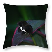 Small Black Butterfly Throw Pillow