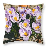 Small Crocus Flower Field Throw Pillow